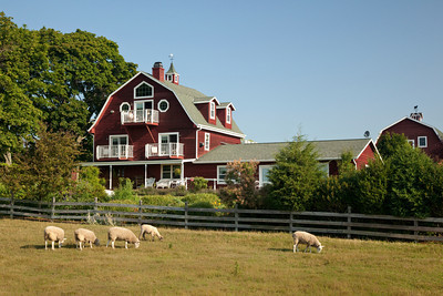 Chanticleer Guest House  Barn and Field