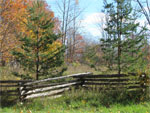 wooden-fence-with-trees